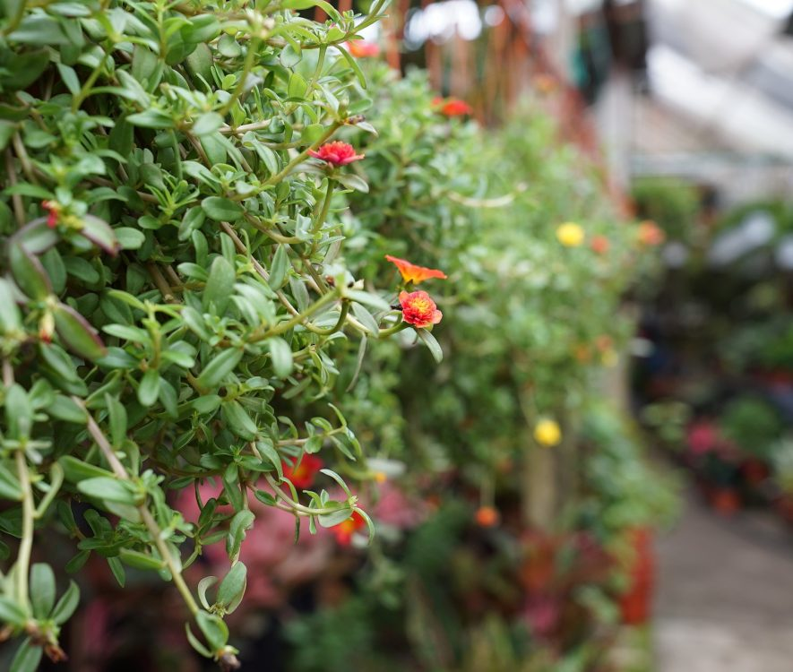 9 Best Garden Centres near Poole & Bournemouth