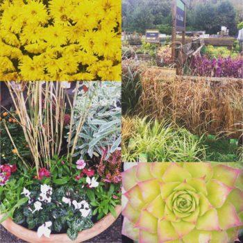 Garden Centres Bournemouth: Wimborne Garden Centre, Wimborne Minster