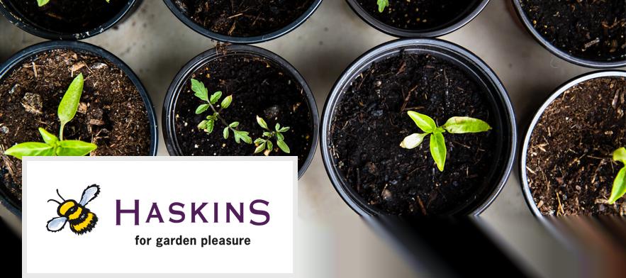 Haskins Garden Centre Ferndown